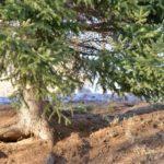 Природа в Белокурихе