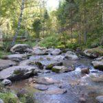 Река Белокуриха