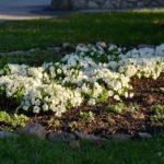Весна в Белокурихе