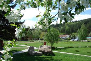 Отдых весной в Белокурихе
