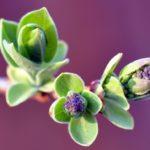 Растения Белокурихи
