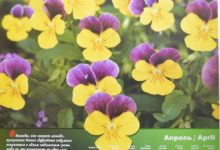 Календарь настенный 2009 год санаторий Алтай-West_апрель