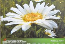 Календарь настенный 2009 год санаторий Алтай-West_июнь