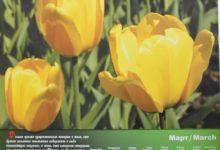 Календарь настенный 2009 год санаторий Алтай-West_март