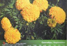 Календарь настенный 2009 год санаторий Алтай-West_сентябрь