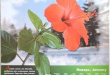Календарь настенный 2009 год санаторий Алтай-West_январь