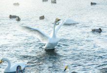 Экскурсия на Лебединое озеро Алтайский край Фотограф Александр Крутев_1