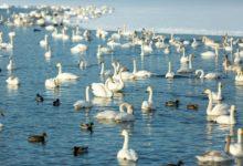 Экскурсия на Лебединое озеро Алтайский край Фотограф Александр Крутев_13