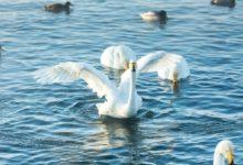 Экскурсия на Лебединое озеро Алтайский край Фотограф Александр Крутев_15
