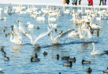 Экскурсия на Лебединое озеро Алтайский край Фотограф Александр Крутев_16