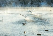 Экскурсия на Лебединое озеро Алтайский край Фотограф Александр Крутев_17