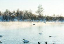 Экскурсия на Лебединое озеро Алтайский край Фотограф Александр Крутев_19