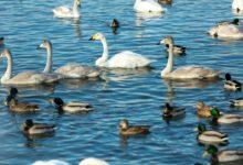 Экскурсия на Лебединое озеро Алтайский край Фотограф Александр Крутев_6