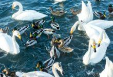 Экскурсия на Лебединое озеро Алтайский край Фотограф Александр Крутев_9
