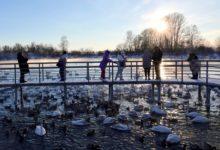 Экскурсия на Лебединое озеро на Алтае отзыв от гостей санатория Алтай-West_10