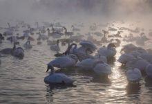 Экскурсия на Лебединое озеро на Алтае отзыв от гостей санатория Алтай-West_11