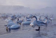 Экскурсия на Лебединое озеро на Алтае отзыв от гостей санатория Алтай-West_15