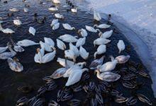 Экскурсия на Лебединое озеро на Алтае отзыв от гостей санатория Алтай-West_2
