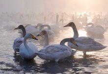 Экскурсия на Лебединое озеро на Алтае отзыв от гостей санатория Алтай-West_3