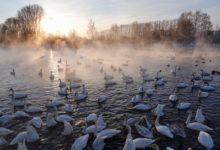 Экскурсия на Лебединое озеро на Алтае отзыв от гостей санатория Алтай-West_5