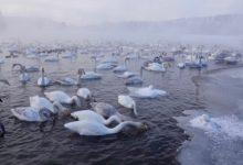 Экскурсия на Лебединое озеро на Алтае отзыв от гостей санатория Алтай-West_6