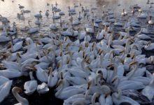 Экскурсия на Лебединое озеро на Алтае отзыв от гостей санатория Алтай-West_7