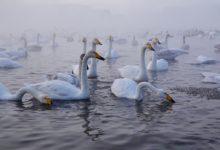 Экскурсия на Лебединое озеро на Алтае отзыв от гостей санатория Алтай-West_8