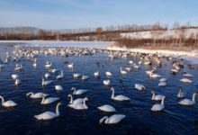 Экскурсия на Лебединое озеро на Алтае отзыв от гостей санатория Алтай-West_9