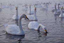 Экскурсия на Лебединое озеро на Алтае отзыв от гостей санатория_Алтай-West_21