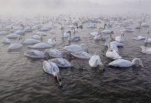 Экскурсия на Лебединое озеро на Алтае отзыв от гостей санатория_Алтай-West_22