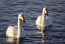 Экскурсия на Лебединое озеро на Алтае отзыв от гостей санатория_Алтай-West_23