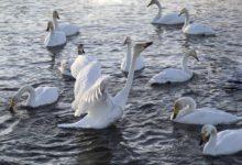 Экскурсия на Лебединое озеро на Алтае отзыв от гостей санатория_Алтай-West_24