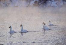 Экскурсия на Лебединое озеро на Алтае отзыв от гостей санатория_Алтай-West_25
