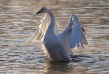 Экскурсия на Лебединое озеро на Алтае отзыв от гостей санатория_Алтай-West_27