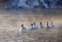 Экскурсия на Лебединое озеро на Алтае отзыв от гостей санатория_Алтай-West_28